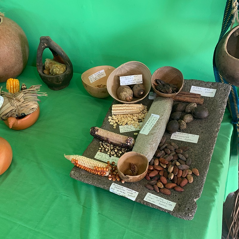 various beans and seeds to compare to cocoa beans